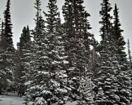 Niwot Ridge Snowshoe Hike