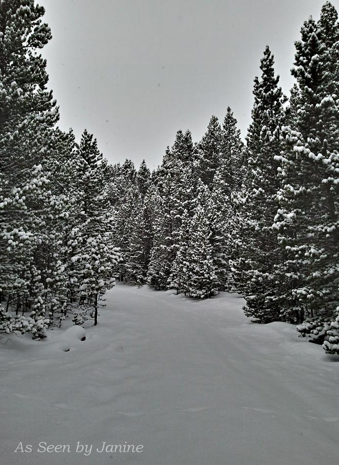 Winter Wonderland Heading up Niwot Ridge
