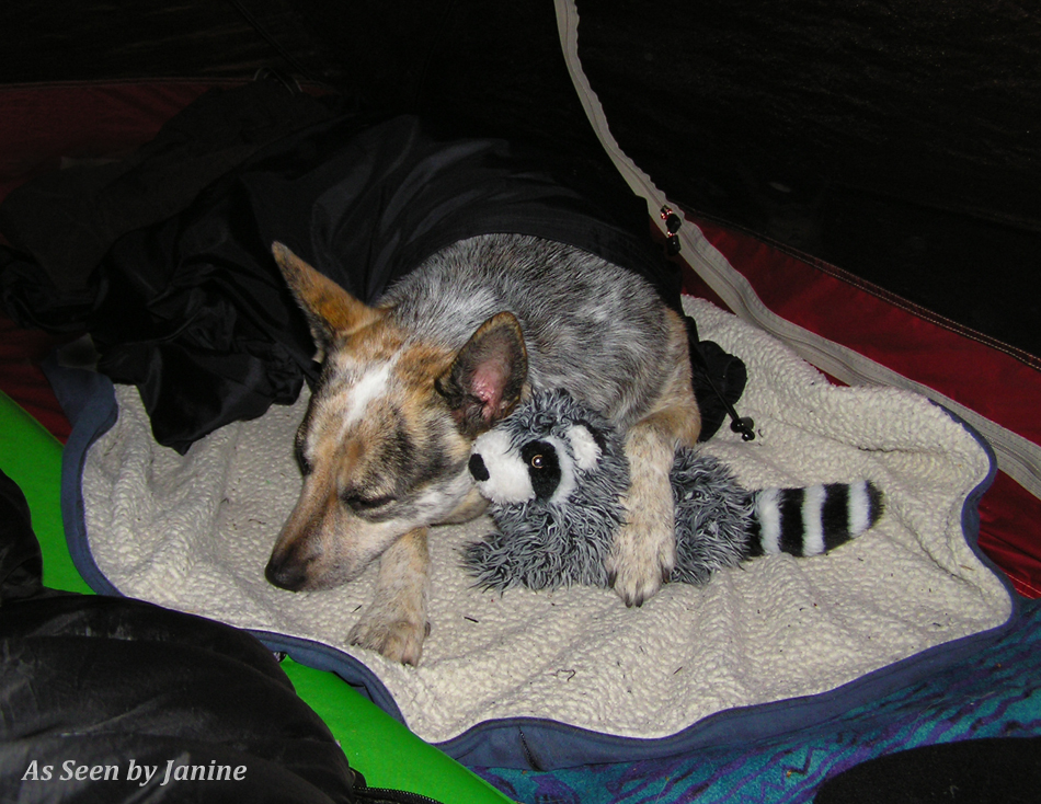Kiah Happily Asleep in the Tent with Her Rocky Racoon