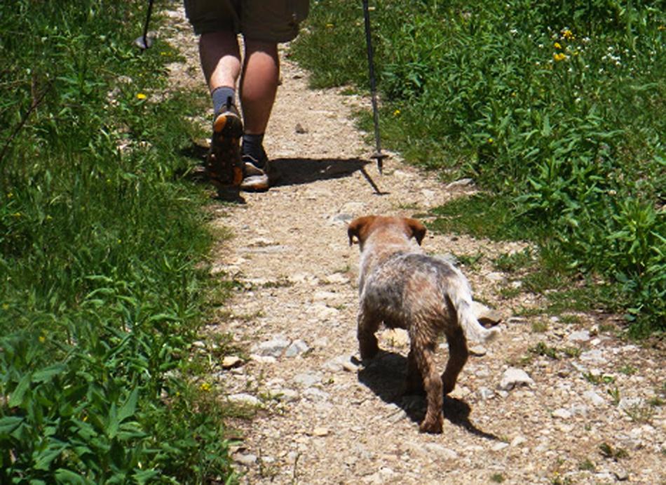 blue heeler, puppy, cattle dog, hiking