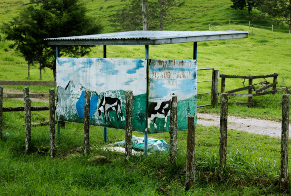 Panamanian Dairy Farm and Bus Stop Shelter