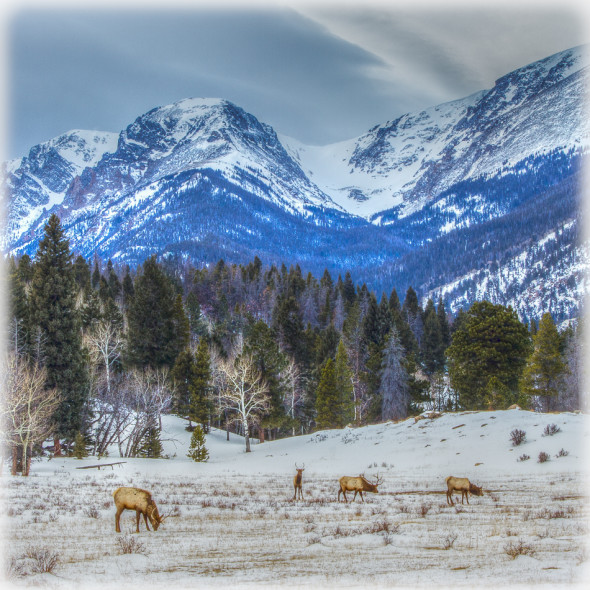 Elk Encounter in Rocky Mountain National Park Photomatix Pro 4.2